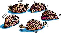 La chiave del ricordo canali-sensoriali